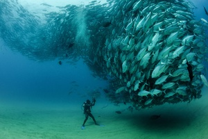 Рыбный вихрь © Octavio Aburto