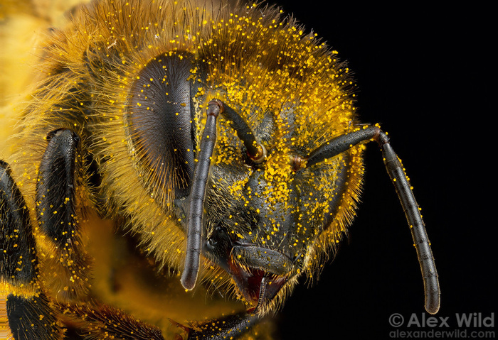 видео про пчел смотреть видео