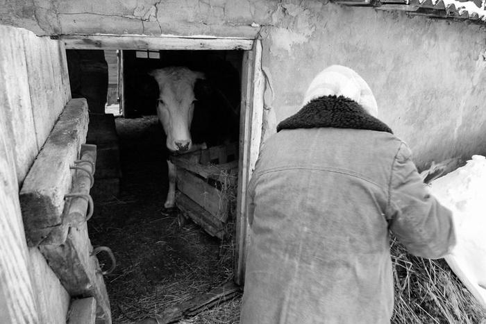 Фотографии о русской деревне. Молоко для внука