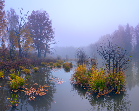 Я отправился в далекое Подмосковье к раннему утру, чтобы застать красивый туман.