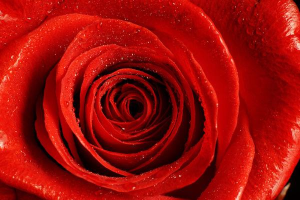 Как сделать селфи с букетом цветов