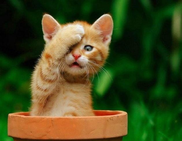 Ученые выяснили, что кошки при фотосъемке испытывают сильный стресс