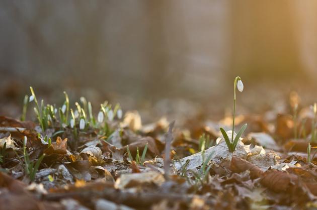 Главный сюжет весны