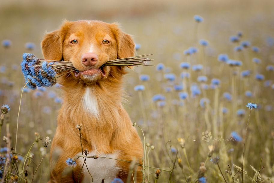 Картинки по запросу Животные, которые радуются лету