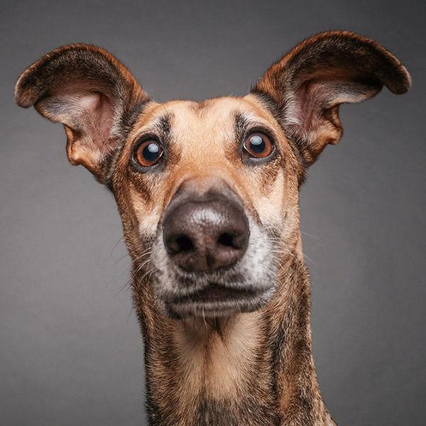 10 собак, у которых всё на морде написано