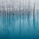 The Most Beautiful Pond in The World © Kent Shiraishi