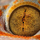 The Eye © Shikhei Goh