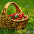Strawberry basket © Laura Pashkevich